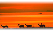 ESENCIA DE SUDAFRICA