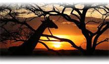 SOBREVOLANDO TANZANIA (Safari privado)