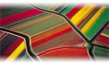 Circuito A BELLA HOLANDA E FLANDRES (Tudo incluido)