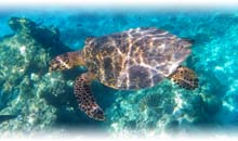 Circuito SUPEROFERTA DUBAI Y MALDIVAS (Cocoon Maldives-Lagoon Villa) (TI)