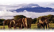 TANZANIA: SAFARI MANYARA (desde Nairobi)