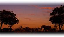 descubriendo sudÁfrica (reserva privada) y cataratas victoria (zambia) con chobe