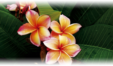 oferta islas fiji: hotel lomani island resort
