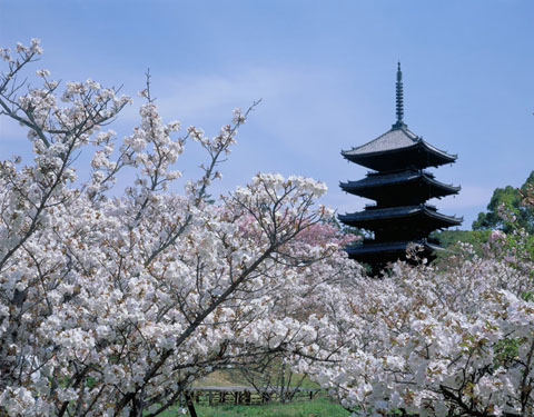 Paquetes de Viajes Baratos a Japón desde Ciudad de México
