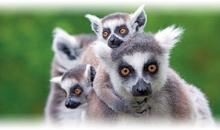 Tours a Madagascar Todo Incluido 2018
