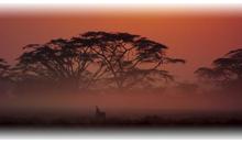 kenya, safari simba y mauricio (lujo)