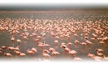 Vacaciones en Kenia Promociones