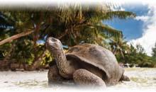Agencia de viajes para Seychelles en Ciudad de México