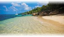 seychelles (coco de mer & black parrot- standard)
